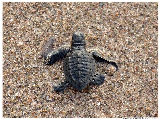 Liberación de tortugas en Puerto Vallarta